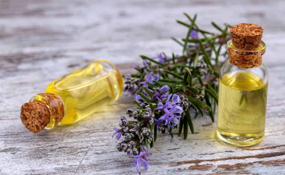 O planta si doua sticlute cu ulei de rozmarin.